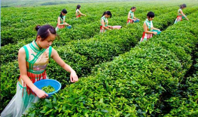 红茶G.jpg